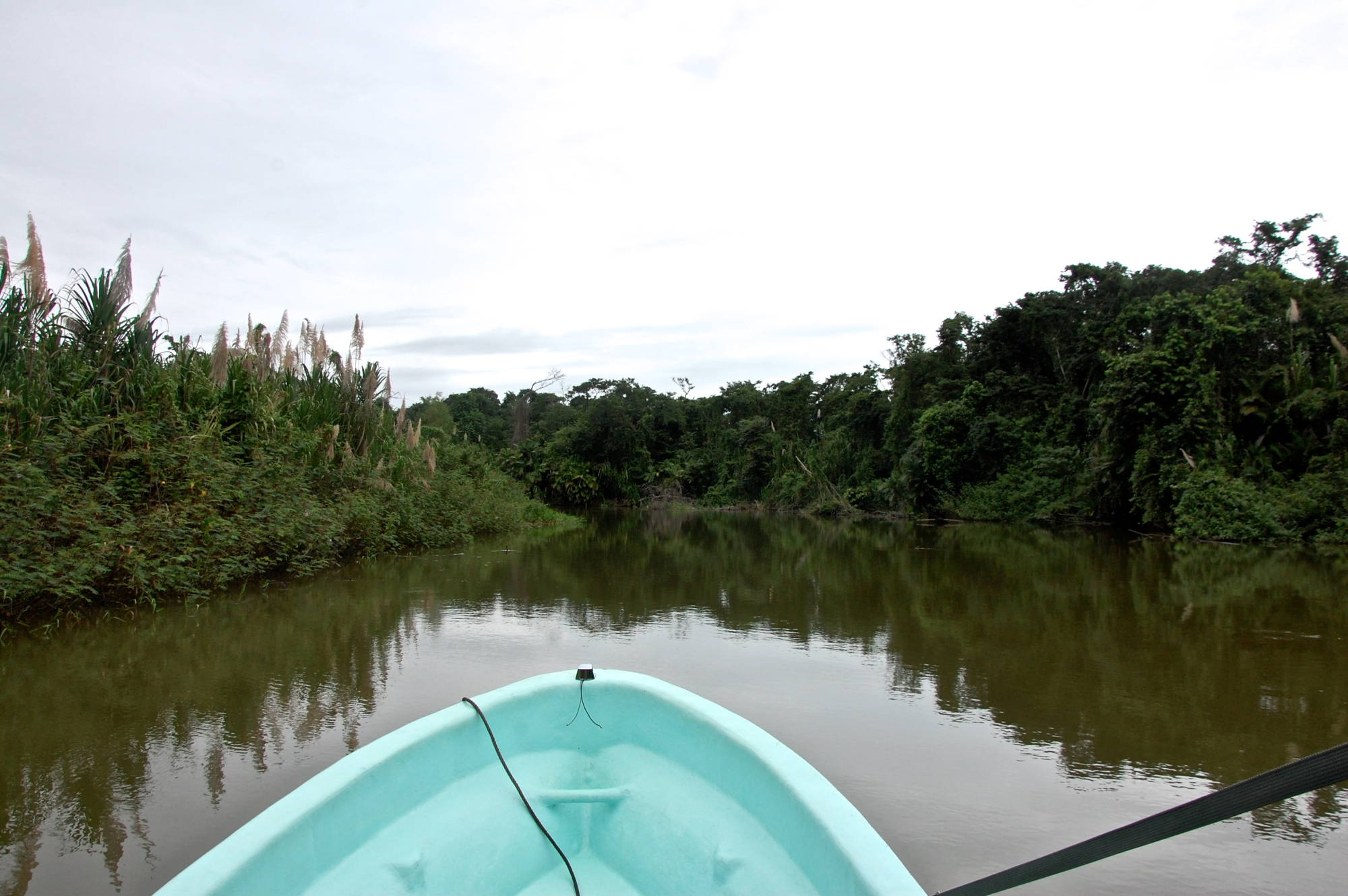 Cruising down the Monkey River