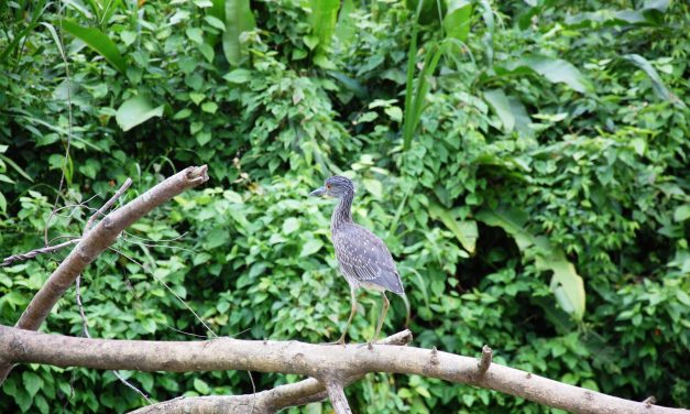 Monkey River Adventures, Belize
