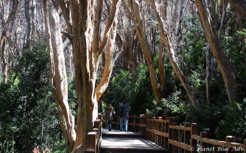 Bariloche, Argentian - Arrayanes Forest