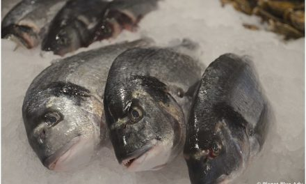 Toppits: Seafood Lovers Don't Walk, Run to the Market