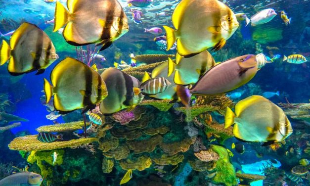 Ripley's Aquarium of Canada – Tips for Visiting